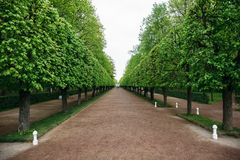 Landscaping decorative design. Raws of trees in park alley. With pathways Royalty Free Stock Images