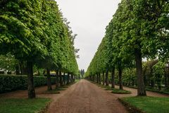 Landscaping decorative design. Raws of trees in park alley with pathways at Petergof or Peterhof Palace. At summer in cloudy day Stock Photos