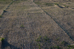 Landscaping erosion control single net  blanket installed Stock Photography