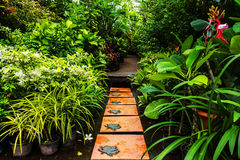Landscaping in the garden. Royalty Free Stock Photography