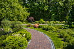 Landscaping in the garden. The path in the garden.Beautiful back. Yard landscape design,Some flowers and nicely trimmed bushes on the leveled front yard Royalty Free Stock Photography