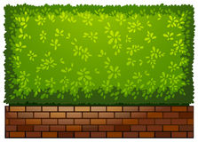 A landscaping green plant Stock Photography