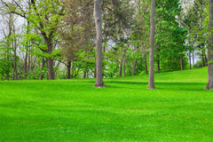 Landscaping Royalty Free Stock Image