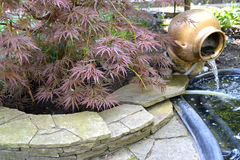Landscaping with a maple  palmiform  of  Bloodgood (Acer palmatum (Thunb.) Thunb.) Royalty Free Stock Photos