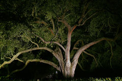 Landscaping - Oak Tree Lit At Night Stock Photo