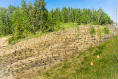 Landscaping public work on a slope with the straw so royalty free stock photos