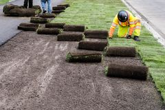 Landscaping sod installation work. Installation of sod on city street landscaping public work project royalty free stock photography