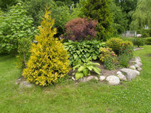 Landscaping with a thuja golden.  Royalty Free Stock Image