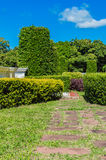 Landscaping trees. On the resort.The result of ideas. Creativity makes a beautiful garden Royalty Free Stock Image
