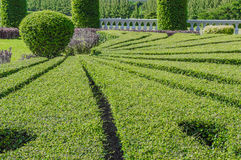 Landscaping trees Royalty Free Stock Photography