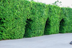 Landscaping trimmed trees in public park Stock Photography