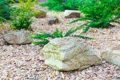 landscaping Una piedra grande en el fondo de las plantas fotos de archivo