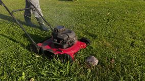 Landscaping worker remove stone from lawn stock video footage