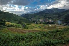 Landscapreis harvestMu cang Chai, Yenbai, Vietnam stockbilder