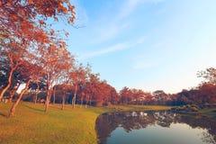 landscapse树和日落在公园 库存照片