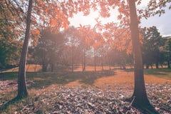 landscapse树和阳光在公园 库存图片