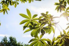 landscapse树和阳光在公园 免版税库存图片