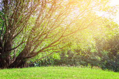 landscapse树和阳光在公园 库存照片