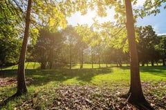landscapse树和阳光在公园 免版税图库摄影
