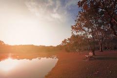 landscapse自然和日落在公园 库存图片