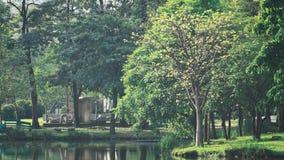 landscapse自然和日落在公园 免版税库存照片
