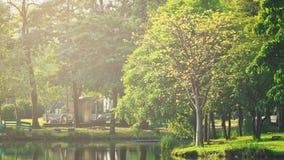 landscapse自然和日落在公园 库存照片
