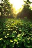 landscapse自然和日落在公园 免版税库存图片