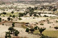 Landschaft in Äthiopien mit Sorghumfeldern Stockfotografie
