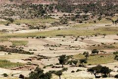 Landschaft in Äthiopien mit Sorghumfeldern Lizenzfreie Stockbilder