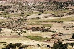 Landschaft in Äthiopien mit Sorghumfeldern Stockbild