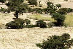 Landschaft in Äthiopien mit Sorghumfeldern Stockfoto