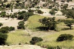 Landschaft in Äthiopien mit Sorghumfeldern Lizenzfreies Stockfoto