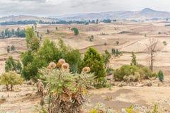 Landschaft in Äthiopien nahe Ali Doro lizenzfreie stockfotografie