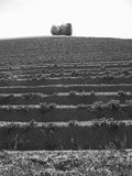 Landschaft 7 Lizenzfreies Stockfoto