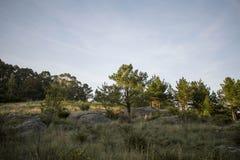 Landschaft 2 Lizenzfreies Stockbild