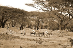 Landschaft Afrika Stockbild