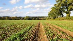 Landschaft-Ansicht Stockbild