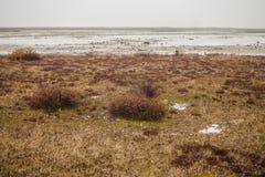 Landschaft: Arktische Tundra Lizenzfreies Stockfoto