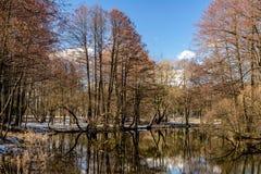 Landschaft auf dem Fluss mit Vorfrühling Stockbilder