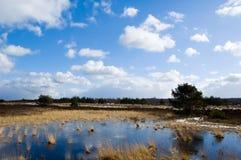 Landschaft auf dem veluwe Stockfotos