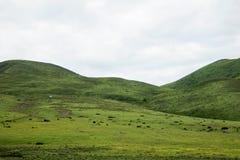 Landschaft auf der Sichuan-Landstraße in China Lizenzfreie Stockfotos