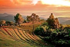 Landschaft auf einem Berg stockfotos