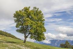 Landschaft auf Monte Bondone Lizenzfreie Stockbilder