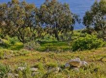 Landschaft; Bäume mit dem Mittelmeer im Hintergrund genommen bei Fawwara, Malta Lizenzfreie Stockbilder
