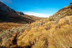 Landschaft bei Nevado Del Ruiz lizenzfreies stockbild