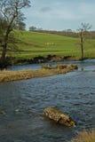 Landschaft, Chatsworth-Park, Fluss Derwent, Höchstbezirk, Derbyshire, Stockbild