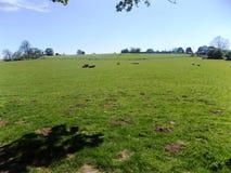 Landschaft, Crookham, Northumberland, England Stockfoto