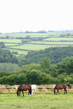 Landschaft Dartmoor des Nationalparks stockfotos