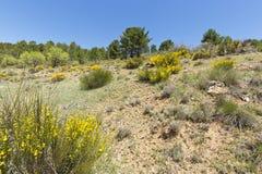 Landschaft in De Arriba Cañadas de Haches Lizenzfreie Stockfotos