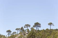 Landschaft in De Arriba Cañadas de Haches Lizenzfreie Stockbilder